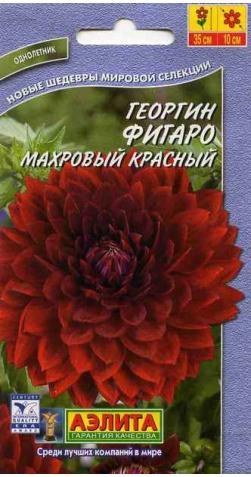 Георгин низкорослый «Фигаро» красный