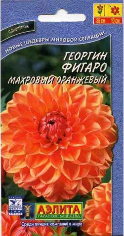 Георгин низкорослый «Фигаро» оранж