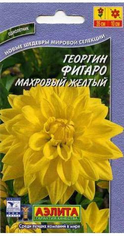 Георгин низкорослый «Фигаро» желтый