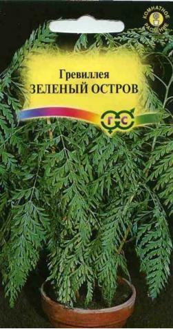 Гревиллея «Зеленый Остров»