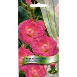 Роза полиантовая «Ангельская»