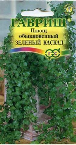 Плющ «Зеленый каскад»