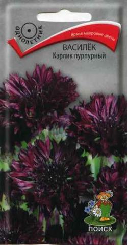 Василек «Карлик» пурпурный