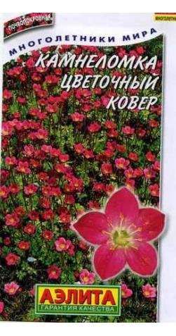 Камнеломка «Цветочный ковер»