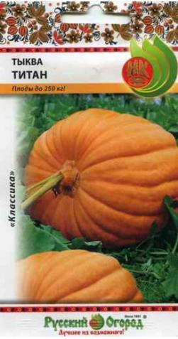 Тыква «Титан» (плоды до 250 кг).