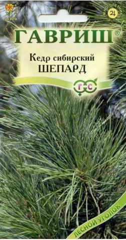 Кедр сибирский «Шепард»