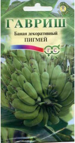 Банан декоративный «Пигмей»