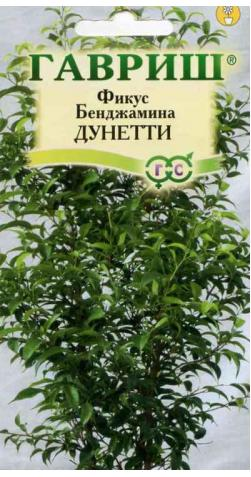 Фикус Бенджамина «Дунетти»