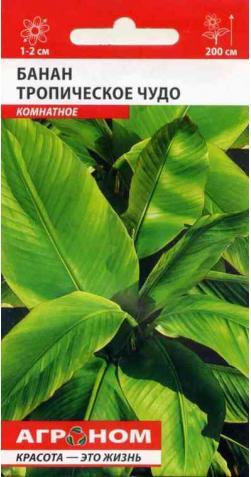 Банан «Тропическое Чудо» комнатный