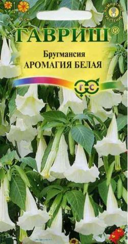 Бругмансия «Аромагия Белая»