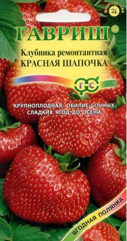 Клубника «Красная Шапочка» ремонтант.