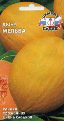 Дыня «Мельба»