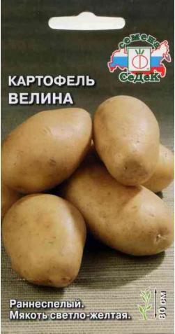 Картофель «Велина»