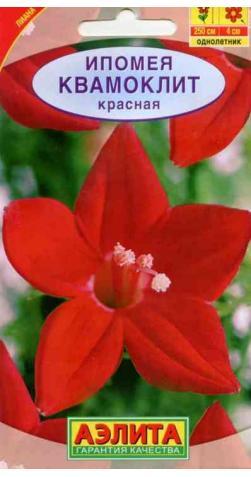 Ипомея «Квамоклит» красная