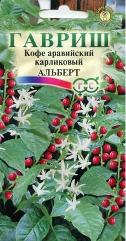 Кофе аравийский карликовый «Альберт»