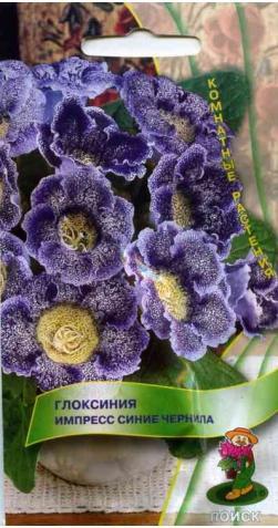 Глоксиния «Синие чернила»