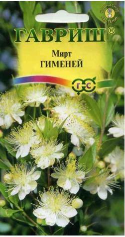 Мирт «Гименей»