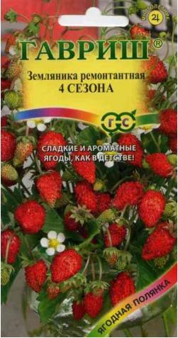Земляника «4 Сезона» ремонтантная.