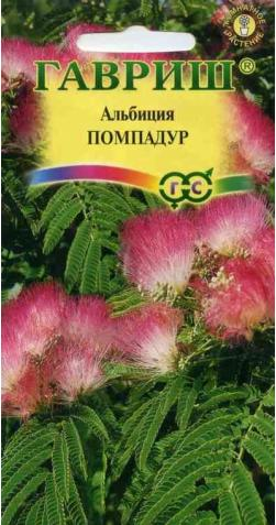 Альбиция (Шёлковое дерево) «Помпадур»
