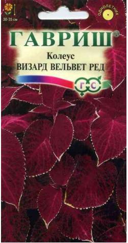 Колеус «Визард Вельвет Ред»