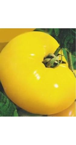 Томат «Желтый гигант»