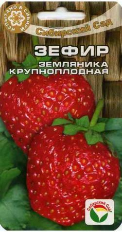 Клубника «Зефир» крупноплодная.