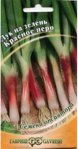 Лук на зелень «Красное перо».