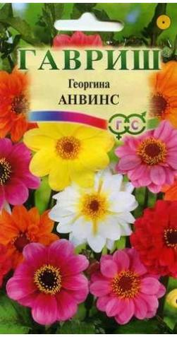 Георгина  «Анвинс»