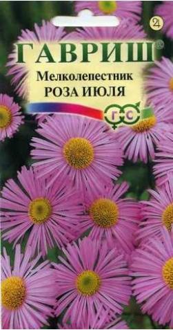 Мелколепестник «Роза июля»