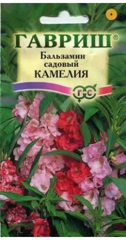 Бальзамин «Камелия» садовый смесь