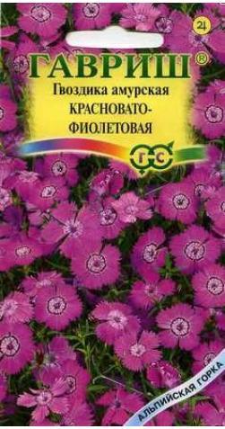 Гвоздика амурская «Красновато-Фиолетовая»