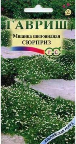 Мшанка шиловидная «Сюрприз»
