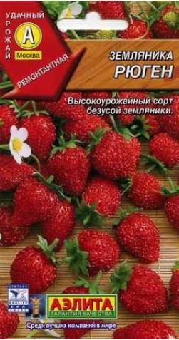 Земляника «Рюген» ремонтантная.