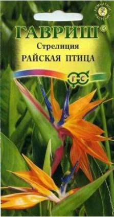 Стрелиция «Райская птица»