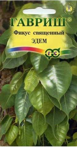 Фикус священный  «Эдем»