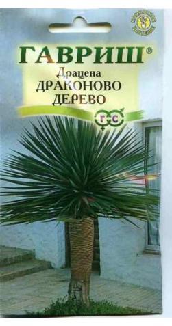 Драцена «Драконово дерево»