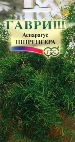 Аспарагус «Шпренгера»