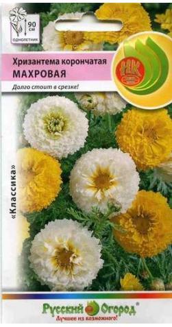 Хризантема «Махровая»