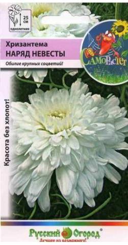 Хризантема «Наряд Невесты»