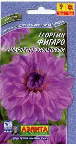 Георгин низкорослый «Фигаро» фиолетовый