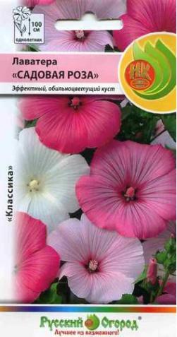 Лаватера  «Садовая роза»