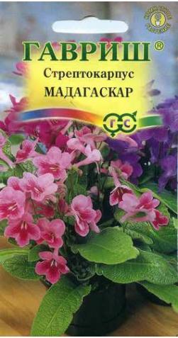 Стрептокарпус «Мадагаскар»