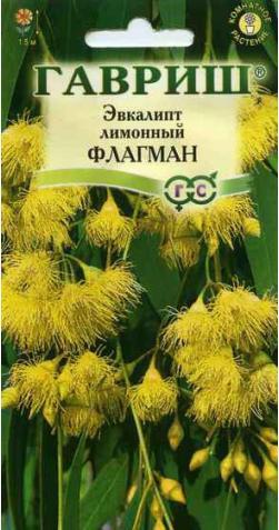 Эвкалипт лимонный «Флагман»