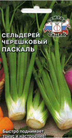 Сельдерей черешковый «Паскаль».