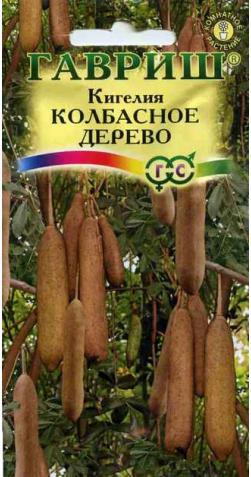 Кигелия «Колбасное дерево»