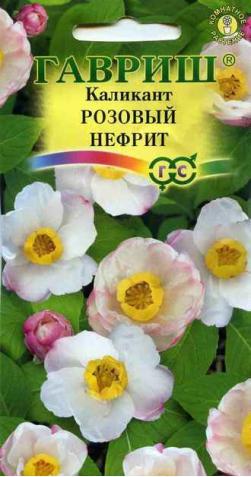 Каликант «Розовый Нефрит»