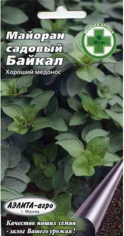 Майоран садовый «Байкал»