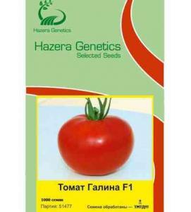 Томат «Галина F1» (Hazera Genetics  Израиль)