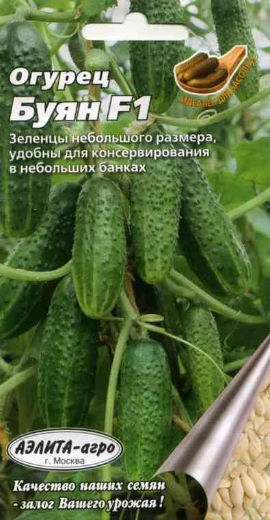 семена огурцов бьерн